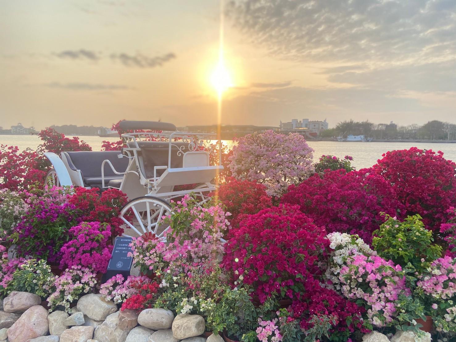 春天乘著馬車來-九重葛花卉藝術裝置
